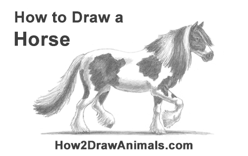 How To Draw A Horse Gypsy Video Amp Step By Step Pictures