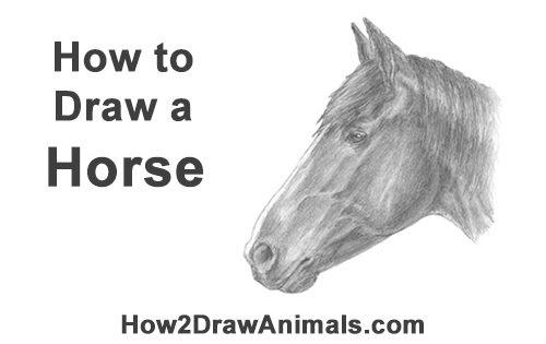 How to Draw a Horse (Head Detail)