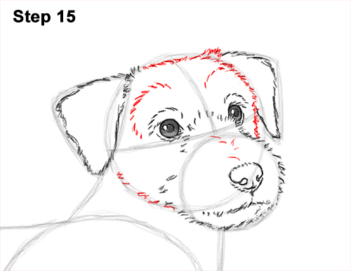 How to Draw a Cute Jack Russell Terrier Puppy Dog 15