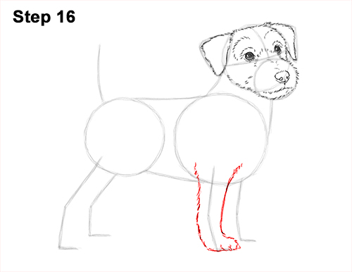 How to Draw a Cute Jack Russell Terrier Puppy Dog 16