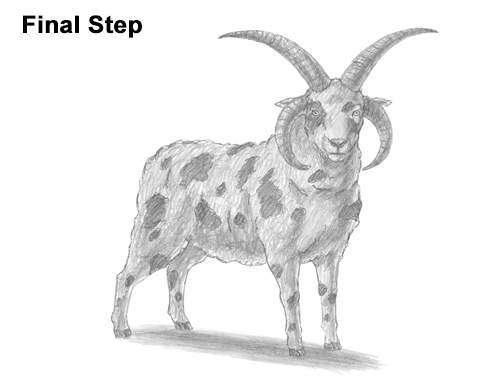 How To Draw Sheep Horns
