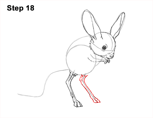 How to Draw Long-Eared Jerboa 18
