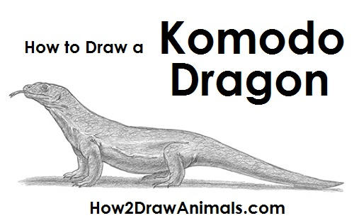 Draw Komodo Dragon