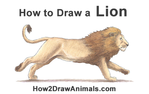 How to Draw Male Lion Running Side Color