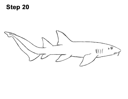 How to Draw a Nurse Shark 20