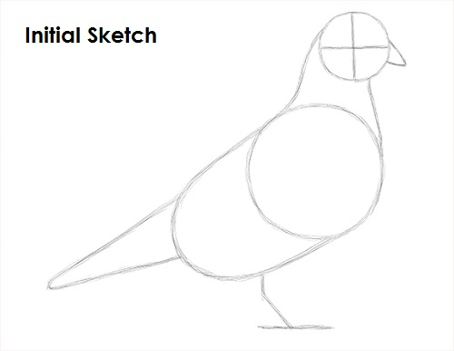 Draw Pigeon Bird Sketch