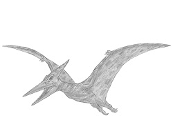How to Draw a Pteranodon Dinosaur