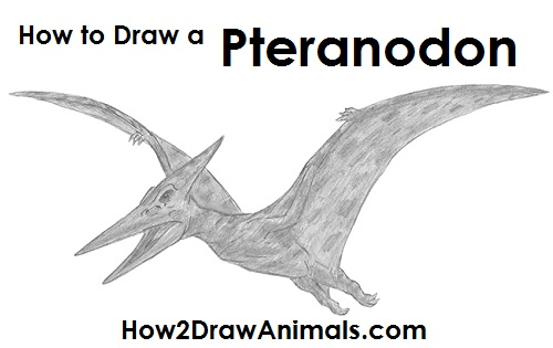 How to Draw a Pteranodon
