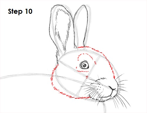 How To Draw A Rabbit Furry
