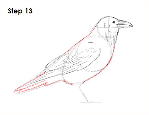 How To Draw A Raven Or Crow