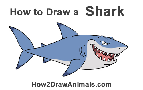How to Draw a Tough Cartoon Great White Shark