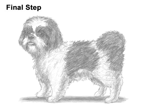 How to Draw a Dog (Shih Tzu)