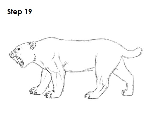 How To Draw A Smilodon Saber Tooth Tiger