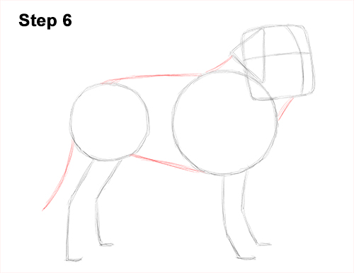Draw St. Bernard Dog 6