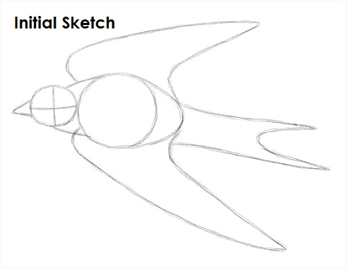 Draw Swallow Bird Sketch