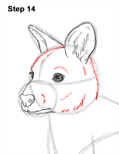 How to Draw a Red-Necked Wallaby 14