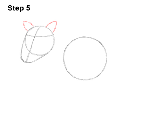 How to Draw a Common Warthog Pig 5