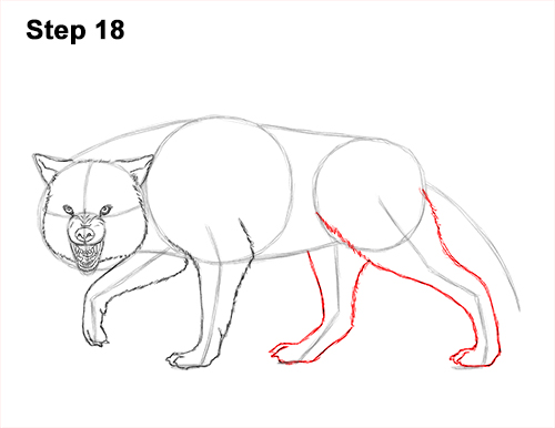Draw Wolf Snarling 18
