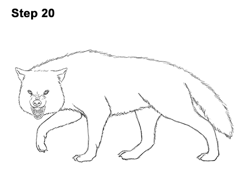 Draw Wolf Snarling 20
