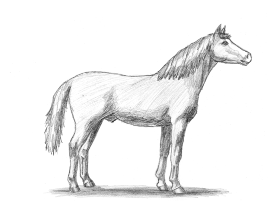 Drawing Sketch Pictures Of Horses