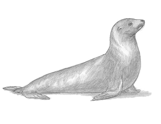 How to Draw a Seal