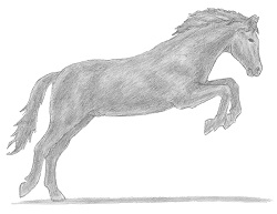 How to Draw Horse Jumping