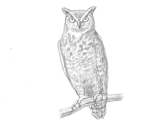 How to Draw a Great-Horned Owl