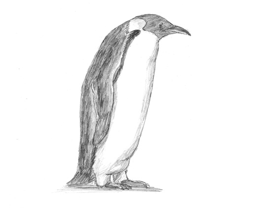 How to Draw an Emperor Penguin